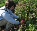 brynn-harvesting-swiss-chard