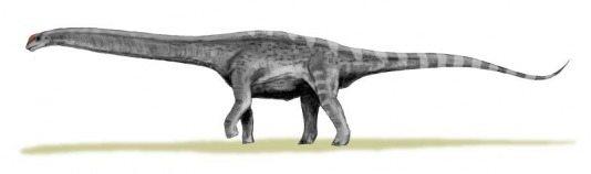 argentinosaurus_bw