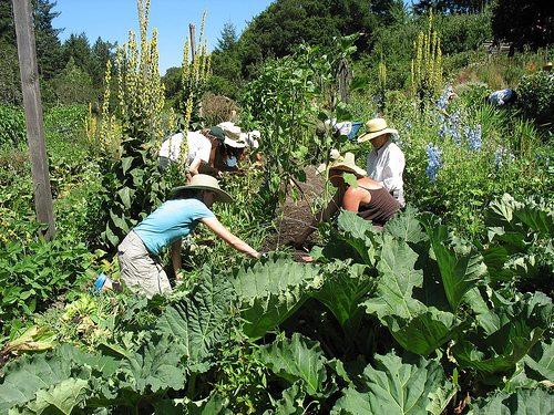 teacher-gardening2
