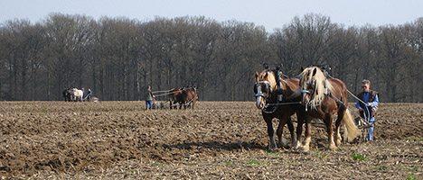 20090219-draft-horses