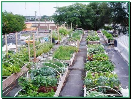 rooftop-garden2