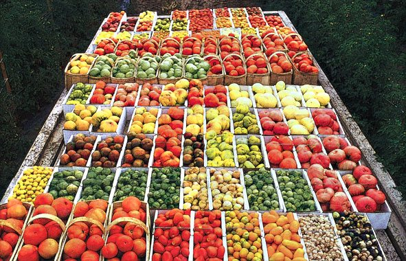 heirloom-tomatoeszefuture3