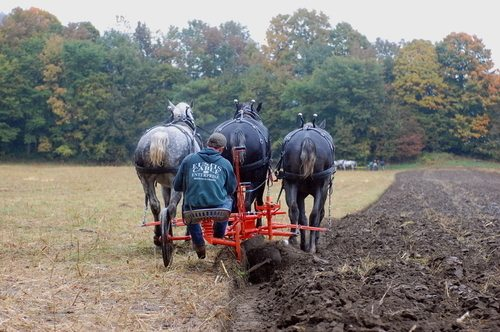 Andre Palmer Plowing 3 Abreast with White Horse Plow at Howvale Farm Working Demos