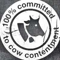 cow-content_1