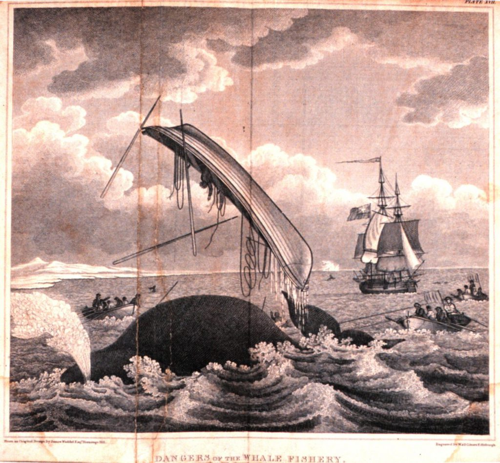 Whaling-dangers_of_the_whale_fishery