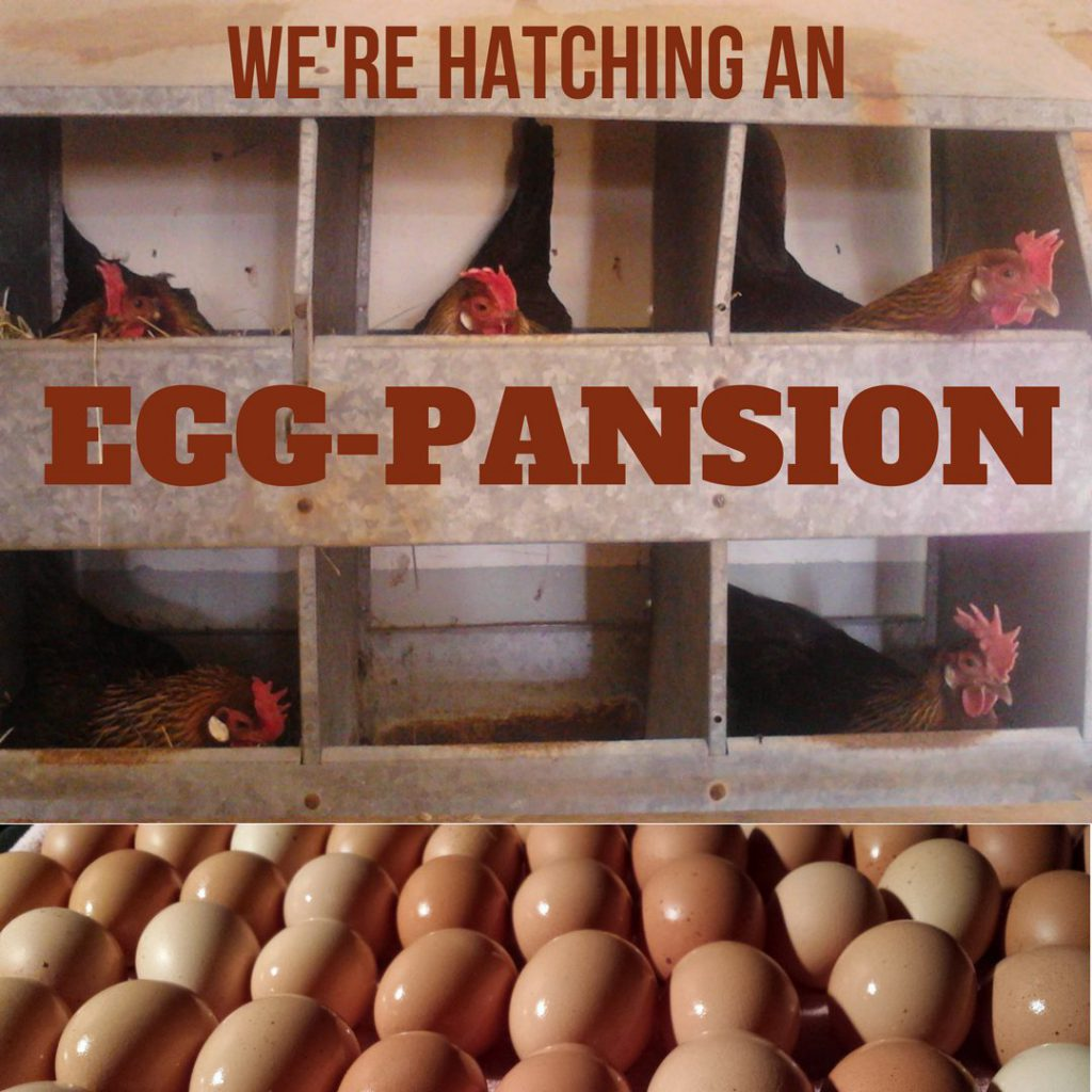 Egg Spansion 940x700-4