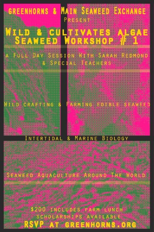 seaweed workshop flyer